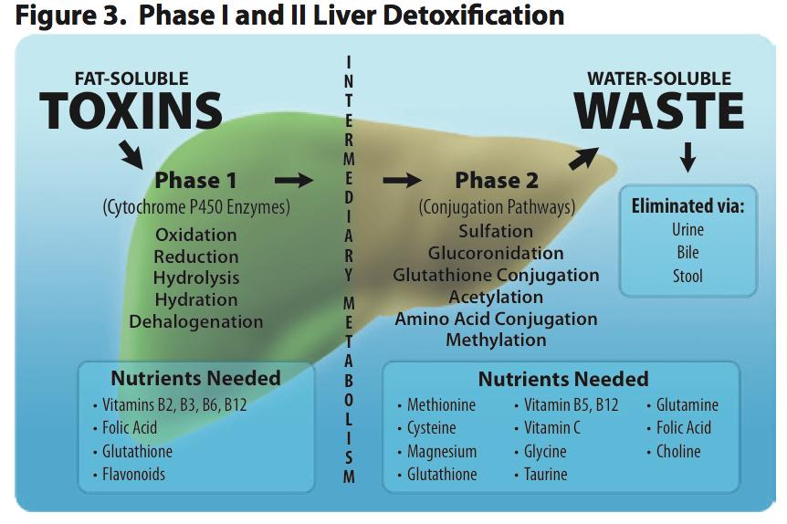 detoxificacion hepatica